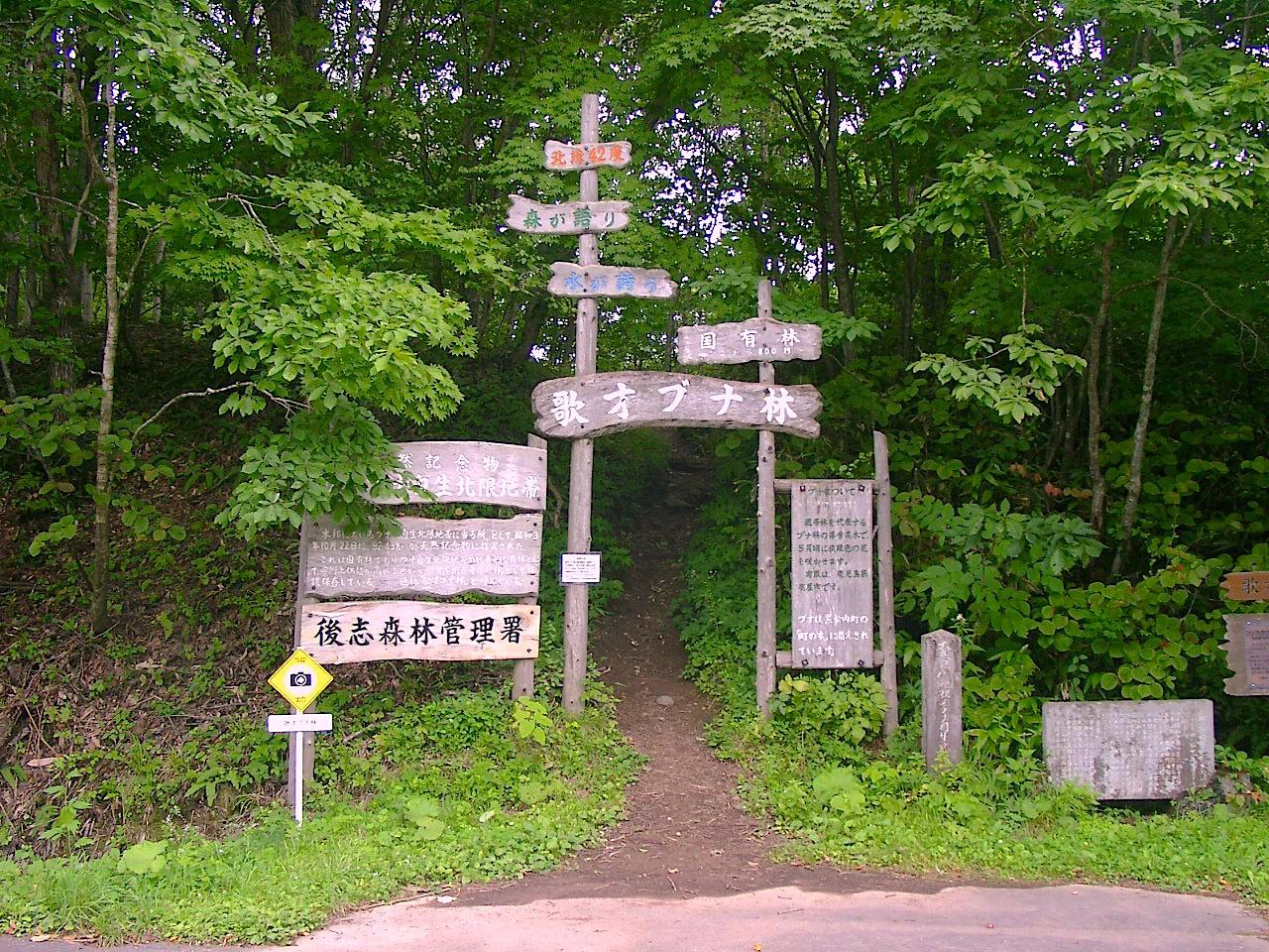 歌才ブナ林の探勝路の入口