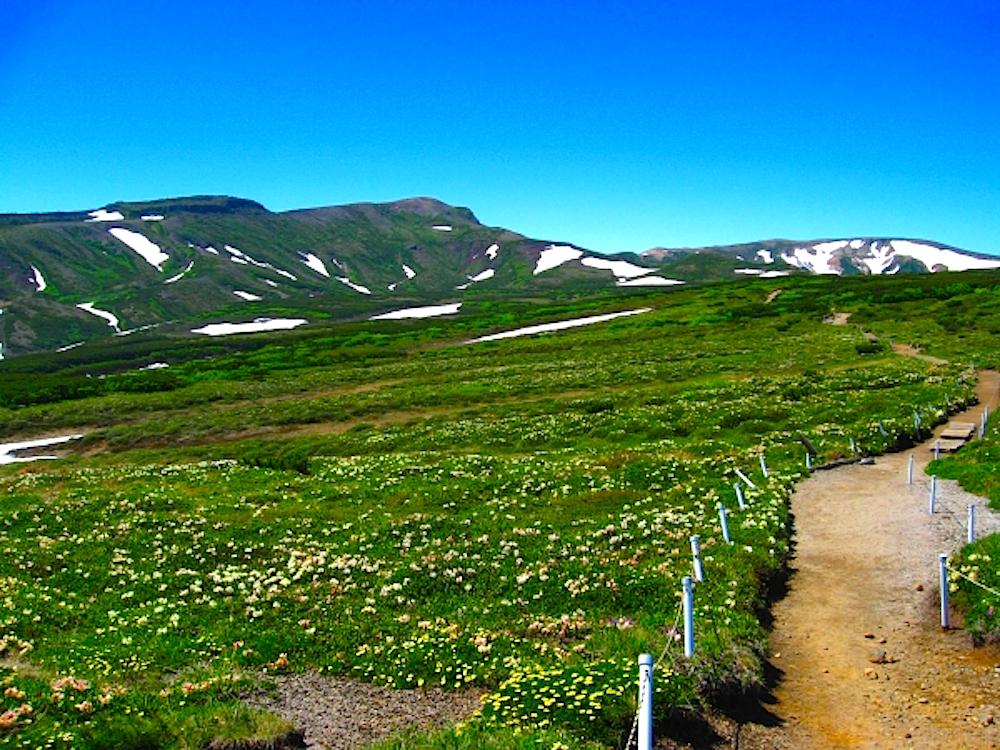 黒岳山頂からもうふと踏ん張り歩けば黒岳石室で、周囲はお花畑!