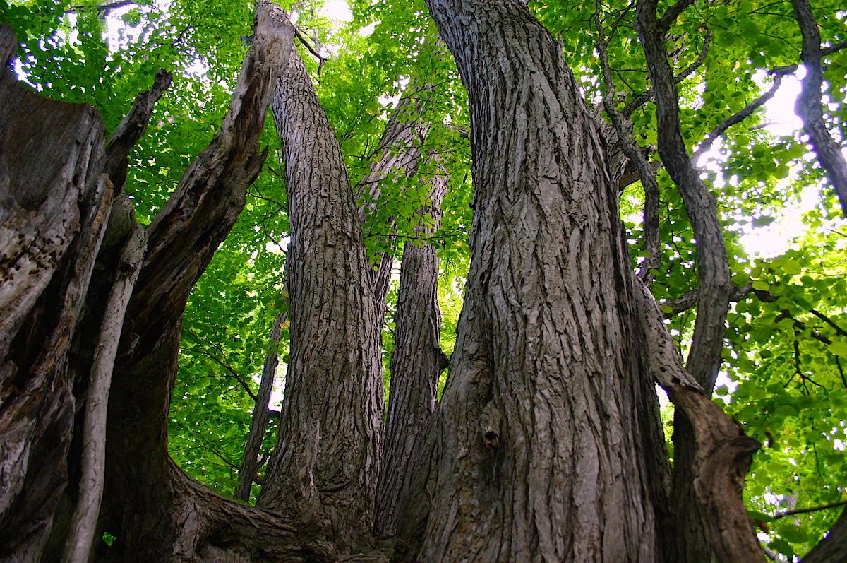 開拓時代そのままの自然が残される野幌森林公園