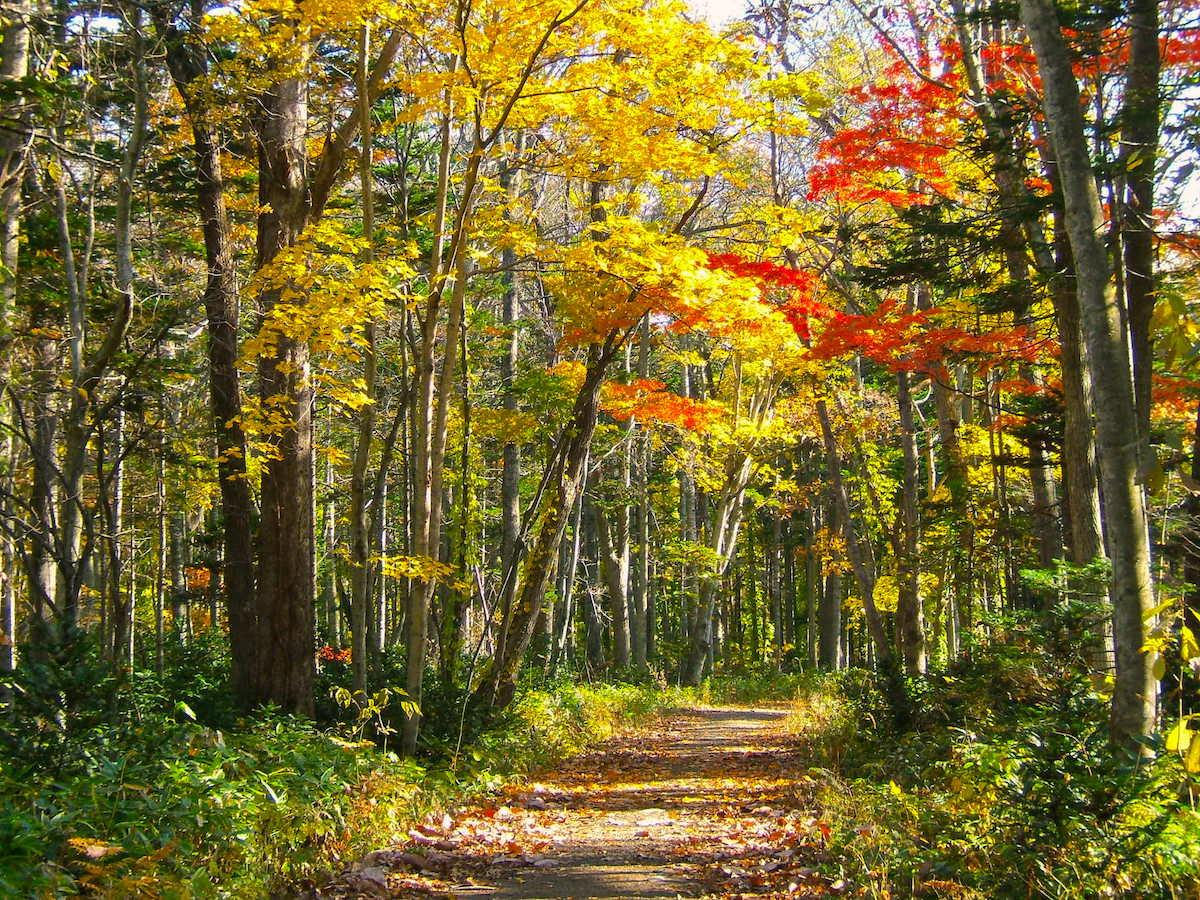 公園内には遊歩道も整備され、紅葉狩りにも絶好