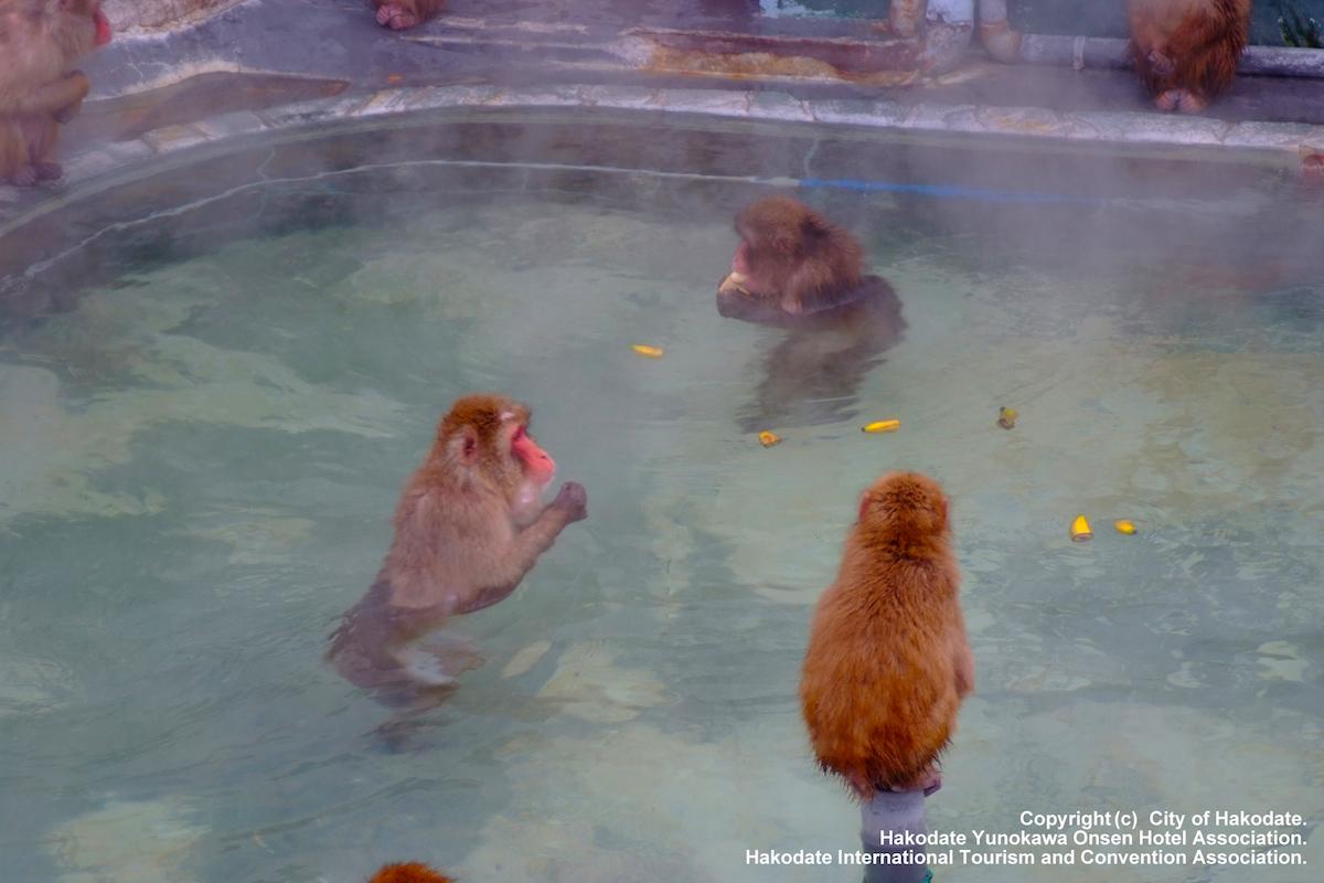 函館 サル山温泉
