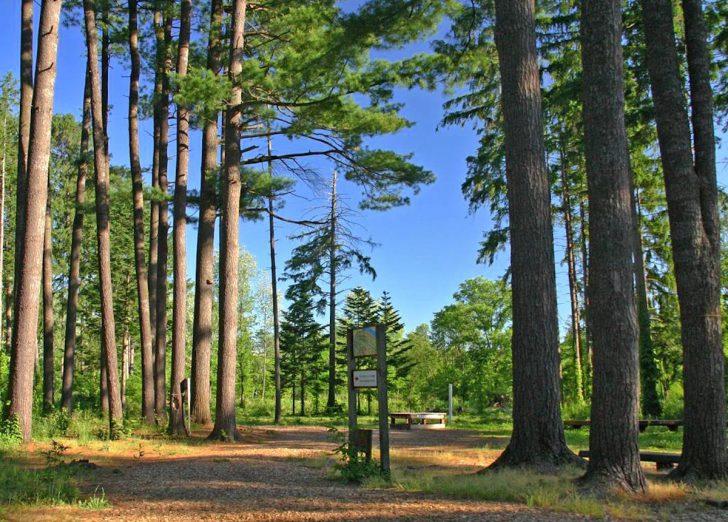 神楽外国樹種見本林