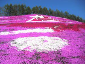 ひがしもこと芝桜まつり
