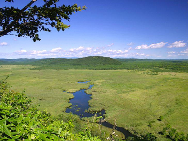 コッタロ湿原展望台