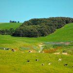 豊富町大規模草地育成牧場