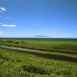 抜海原生花園
